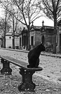Black cat at the Père Lachaise Cemetery in Paris, France. Halloween En France, Crazy Cat Lady, Crazy Cats, Chat Paris, Père Lachaise Cemetery, Old Cemeteries, Graveyards, New Orleans Cemeteries, Photo Chat