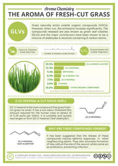 The second in the 'Aroma Chemistry' series, this graphic examines the smell of fresh-cut grass. This is oft-mentioned when discussions of favourite smells come up, so what are the chemi… Science Facts, Food Science, Science And Nature, Science Experiments, Science Room, Science Notes, Food Chemistry, Organic Chemistry, Chemistry Projects