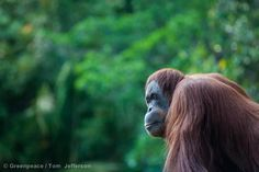 The EnvironmentaLIST: 14 Reasons We Need to Save Indonesia From Deforestation