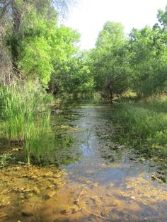 If you're looking for a cool morning hike, remember that a number of our preserves, including the Jewel of the Creek Preserve, are open to the public.  Water in the desert is always wonderful, but it's especially remarkable in the summer!  Visit http://www.dflt.org/hikes.php for more information.