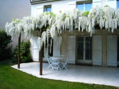 glycine blanche Beautiful Home Gardens, Beautiful Homes, Pergola, Facade, Home And Garden, Outdoor Structures, Architecture, Nature, House