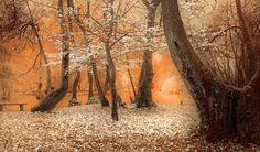 Trees - Autumn Impression Ilidza, Sarajevo, Bosnia
