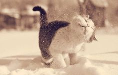Snow cat cute animals outdoors winter cats snow
