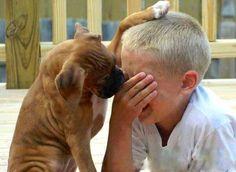 Un chien réconforte un enfant