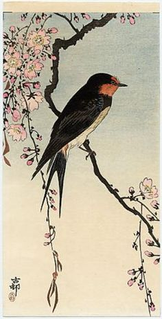 Koson  A Barn Swallow on a Flowering Cherry Branch