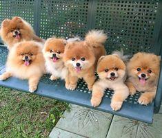 The family gang