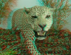 great 3D perspective of this lion