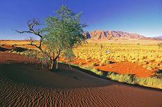 Desert Express – Jewel of Namibia - togreise i Afrika Vineyard, Deserts, Country Roads, Explore, World, Jewel, Outdoor, Outdoors, Vine Yard