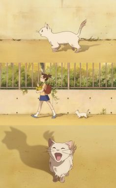 Studio Ghibli's The Cat Returns (Blu-ray) Review: North America vs. Australia