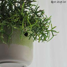 @BUDGETHOME @budgethome Best-budget-buy; Deze Leuke Hangpot Is Te Koop Voor €2,99 Bij Action. Ook Verkrijgbaar I... | - Pictigar