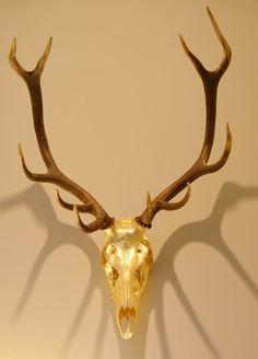 Goldene Hirschtrophäe #lefineza #meran #merano #südtirol #chaletstyle #flowers #design #home #interior #gold #plaid #antlers #geweih #einrichtung #arredamento #southtyrol #altoadige #italy #italia #ampliamento #bestoftheday #pictureoftheday #teppich #cowhide #hirsch #luxury #manufaktur #manufacturing #swarovski