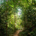 Taman Negara Nationaal Park: de Maleisische natuur