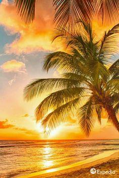Comprar Moda redutor IndoorOutdoor Capacho - Sandy Tropical Paradise Beach com palmeiras eo Oceano mar por Edully Beautiful Sunrise, Beautiful Beaches, Beach Scenes, Tropical Paradise, Belle Photo, Pretty Pictures, Beach Pictures, Beautiful Landscapes, Beautiful World