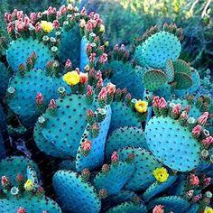 300 Pieces/Bag Best-Selling!!Succulent Cactus Seeds Bonsai Potted Plants Home Gardening Flower Pots Balcony flower seeds #gardeningflowers