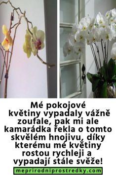 Flora, Celebrity, Home Decor, Decoration Home, Room Decor, Plants, Celebs, Home Interior Design, Home Decoration