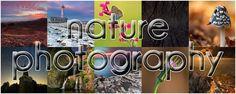 Alfonso Morabito - Nature Photography
