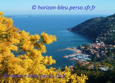 Mimosa - overlooking the harbor of Theoule
