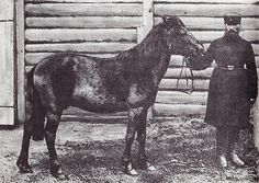 The Tarpan - Prehistoric type of wild horse around France, Spain and central Russia.