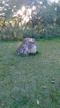 A gata Natalia deitada sobre uma pedra na praça do bairro Sta Catarina.