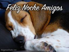 Buenas Noches imagen #8865 - Feliz Noche Amigos Tags: Cachorro, Dormir, Feliz Noche, Noche.