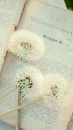 Lovely dandelions.....