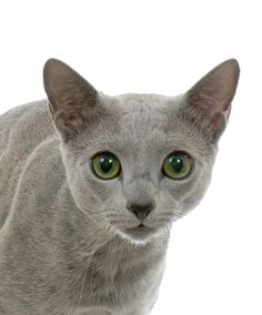 Russian Blue (just like Whoopi's).  I'd name her Whoopi Goldberg.