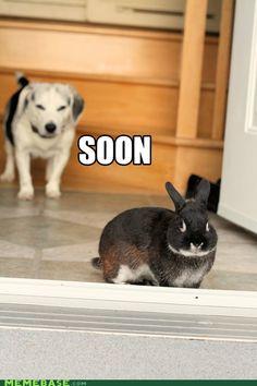 Beagle, beagle, beagle, Bunny!