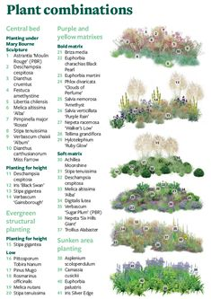 Plan- Create your own version of the RHS Feel Good Garden