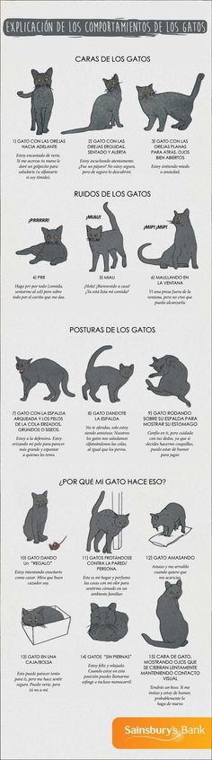 Cats Toys Ideas - Infographic about Cat Behaviours Explained - Most affectionate cat breeds ideas and inspirations - Ideal toys for small cats Crazy Cat Lady, Crazy Cats, Cute Cats, Funny Cats, Adorable Kittens, Cat Body, Cat Info, Cat Behavior, Animal Behaviour