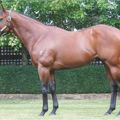Magnus (AUS) Flying Spur, Half Brother, Sport Of Kings, Horse Racing, Race Horses, Thoroughbred, My Ride, Park, Animals