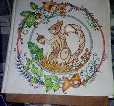 Esquilo  Floresta encantada/jardim secreto