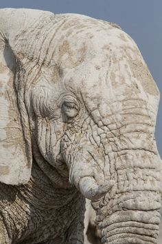 Desert-adapted Elephant © Giovanna Fasanelli http://www.apex-expeditions.com/expedition/namibia/