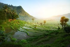 'My parents loved the Javanese landscape with its mountains, waterfalls and shining rice fields...'
