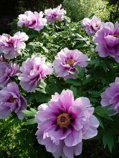 Top 5 Easy-Care Perennials for Your Garden - Page 4 of 5 - GardYardGardYard | Page 4