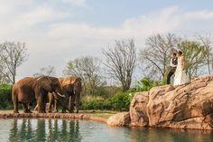 luxury wedding nashville, outdoor, african themed, safari, @Nashville Zoo, @Ashley Hicks, @Renay Zamora (Sweetface Cakes), #gettingmarriednashville
