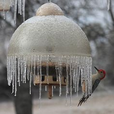 The poor Woodpecker can't seem to navigate around the ice on this Big Top feeder. Check out the photos of the adorable conundrum.