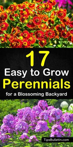 a detailed list of 17 easy to grow low maintenance perennials. Article with a detailed list of 17 easy to grow low maintenance perennials. Article with a detailed list of 17 easy to grow low maintenance perennials. Outdoor Plants, Garden Plants, Flowering Plants, Outdoor Gardens, Plants In Pots, Ivy Plants, Outdoor Flowers, Garden Shrubs, Shade Garden