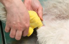 Dog wounds vary in terms of cause and severity. In order to treat a dog's wounds, a dog owner must know the types of wounds, healing process, and treatment options.