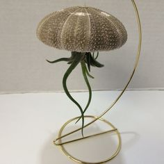 This is a beautiful and unique way to show off an Air Plant. This Jellyfish is a Large Sea Urchin Shell with a Medium Medusas Head Air Plant and