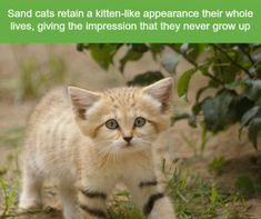 21 Crazy Animal Facts That Prove You Learn Something New Everyday - World's largest collection of cat memes and other animals Crazy Animal Facts, Cat Facts, Random Animal Facts, Random Facts, Cute Funny Animals, Cute Cats, Funny Cats, Fun Funny, Animal Captions