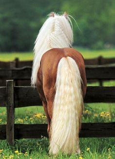 Beautiful #horse #mane and #tail Picture by Gabrielle Boiselle