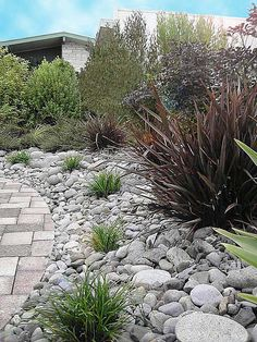 I'd been thinking teeny rocks, but I like these bigger ones by the pavers.  In a matching color? dry river garden