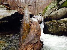 River - Twisted Cedar
