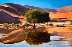 # 7 Most Beautiful Places in Africa - Sossusvlei, Namibia Wonderful Places, Beautiful Places, Amazing Places, Places To Travel, Places To See, Oasis, Desert Trees, Namibia, All Nature