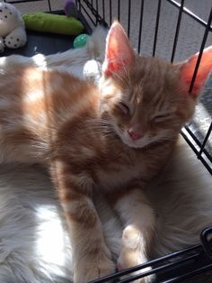 """""""My 13 week old kitten Charlie having a nap whilst enjoying the comfort of his new blanket! Lovely product - nice to find animal products with more taste. Have just purchased a second one."""" Nicole, Leeds, UK - thanks to Nicole for the lovely message and what a cutie is Charlie!"""