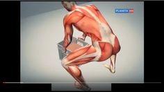 Dor nas costas:  o nervo ciático       Dr. Agapkin dá um exercício simples para    eliminar a dor ...