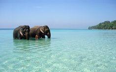 Elephants, man, blue sea...
