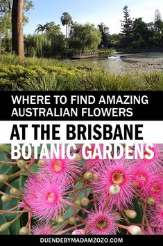 Experience uniquely beautiful Australian flowers with this virtual walk through the Brisbane Botanic Gardens. Enjoy these native blooms and more in these stunning subtropical Gardens. Brisbane City, Brisbane Australia, Western Australia, Australia Travel, Australian Flowers, Australian Plants, Things To Do In Brisbane, Kakadu National Park, Australian Capital Territory