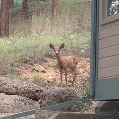 Our little Bambi. #deer #animals #Bambi