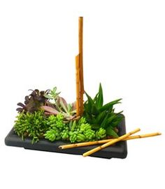 Garden of Zen succulent garden by Cactus Flower Florists, AZ – $39.99